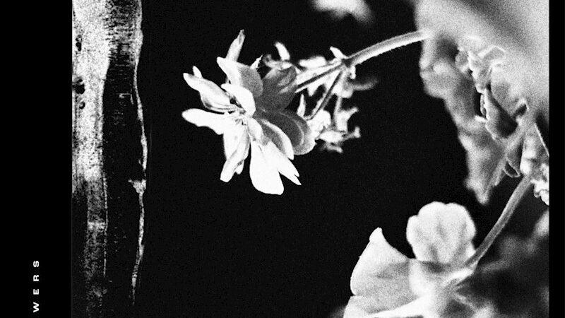 Review: JINJER – Wallflowers